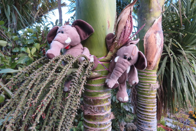elephants on nikau