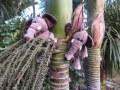 elephants on nikau