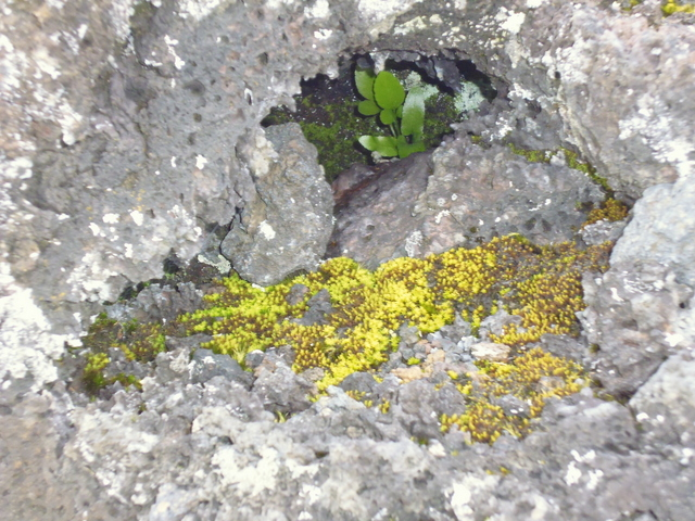 lava-with-seedling