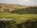 17-Te Henga wetland