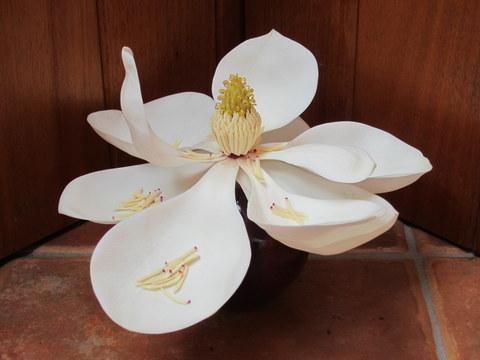 solstice magnolia